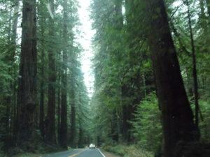 redwood-drive